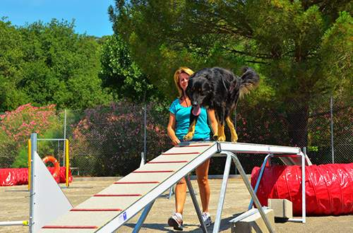 Agility field to train your dogs at Domaine de Gaujac campsite